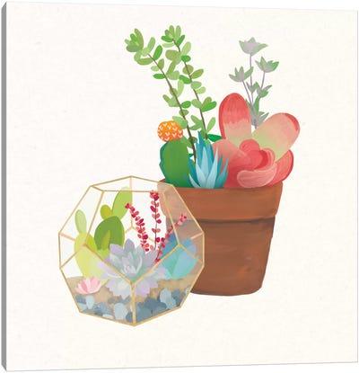 Succulent Garden III Canvas Print #WAC4534