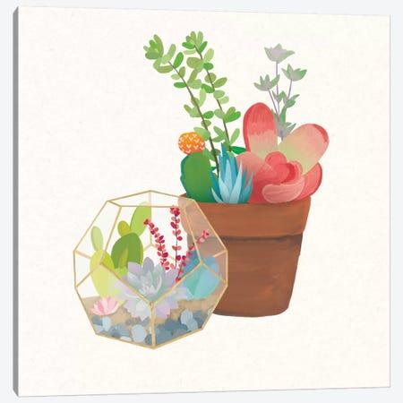 Succulent Garden III Canvas Print #WAC4534} by Wild Apple Portfolio Canvas Wall Art