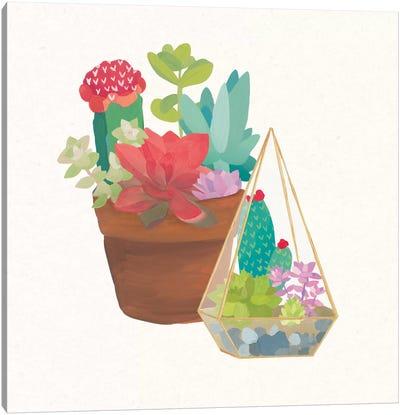 Succulent Garden IV Canvas Print #WAC4535