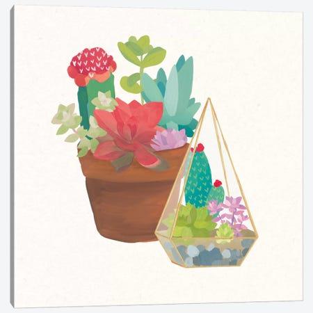 Succulent Garden IV Canvas Print #WAC4535} by Wild Apple Portfolio Canvas Wall Art