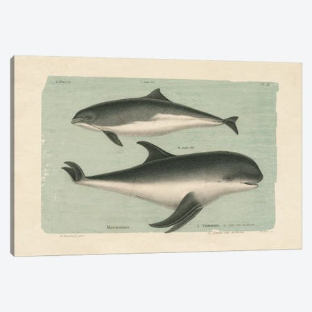 Whale Sketch I Canvas Print #WAC4543} by Wild Apple Portfolio Canvas Art