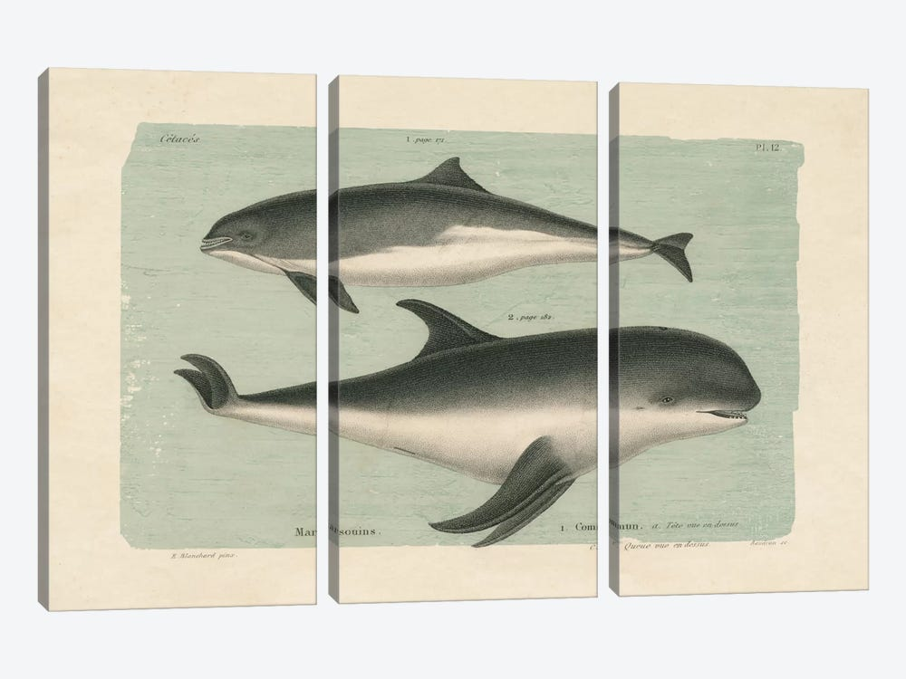 Whale Sketch I by Wild Apple Portfolio 3-piece Canvas Print