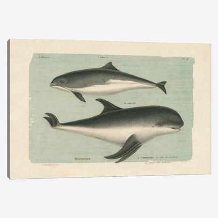 Whale Sketch I Canvas Print #WAC4543} by Wild Apple Portfolio Canvas Art