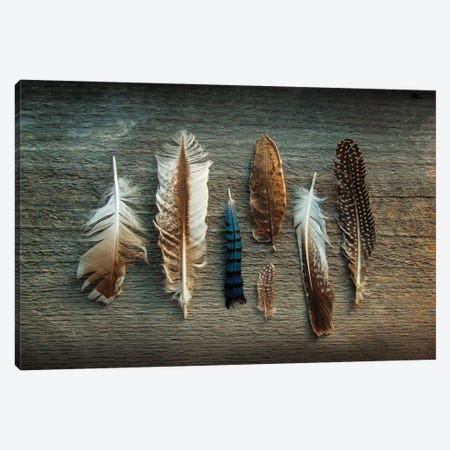 Feather Collection I Canvas Print #WAC4553} by Sue Schlabach Canvas Art Print