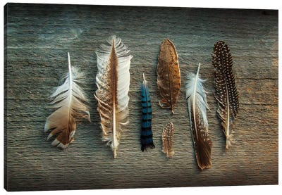 Feather Collection I Canvas Art Print