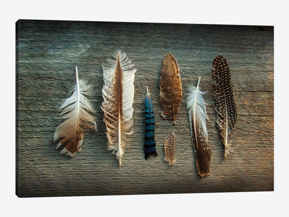 Feather Collection I by Sue Schlabach 1-piece Canvas Artwork
