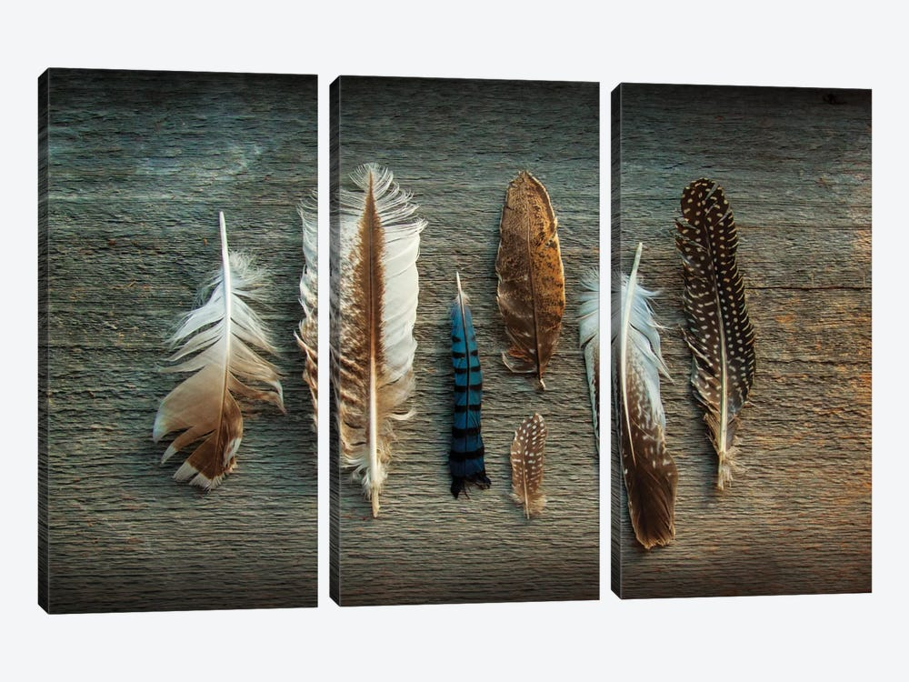 Feather Collection I by Sue Schlabach 3-piece Canvas Artwork