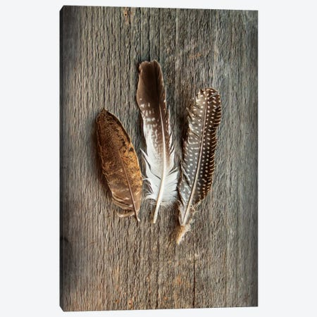 Feather Collection II Canvas Print #WAC4554} by Sue Schlabach Canvas Artwork