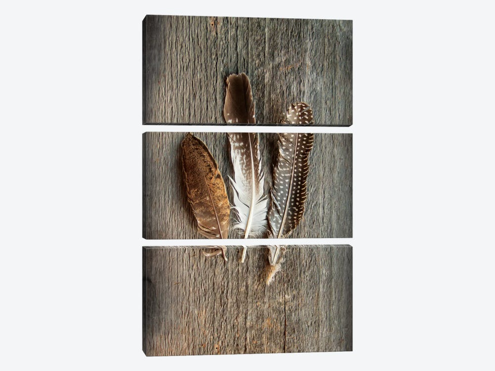 Feather Collection II by Sue Schlabach 3-piece Canvas Print