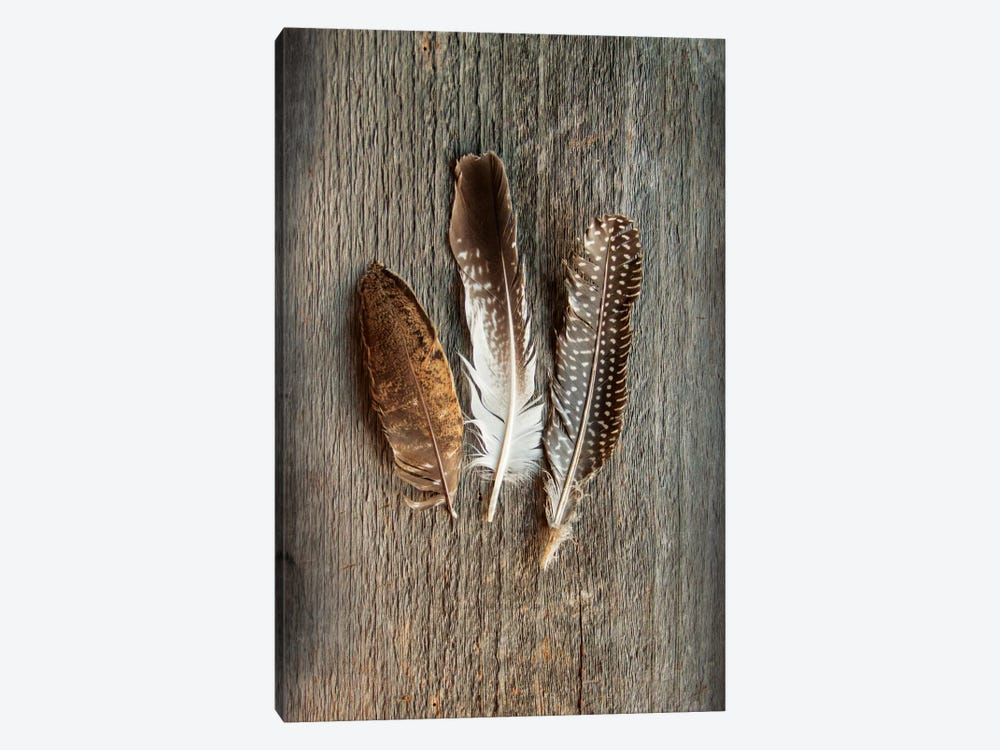 Feather Collection II by Sue Schlabach 1-piece Canvas Art Print