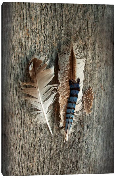 Feather Collection III Canvas Art Print