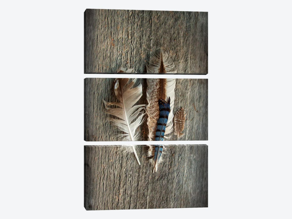 Feather Collection III by Sue Schlabach 3-piece Canvas Art