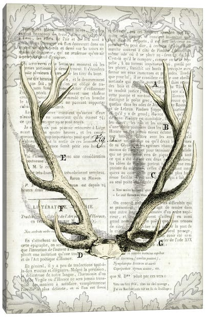 Regal Antlers On Newsprint I Canvas Art Print