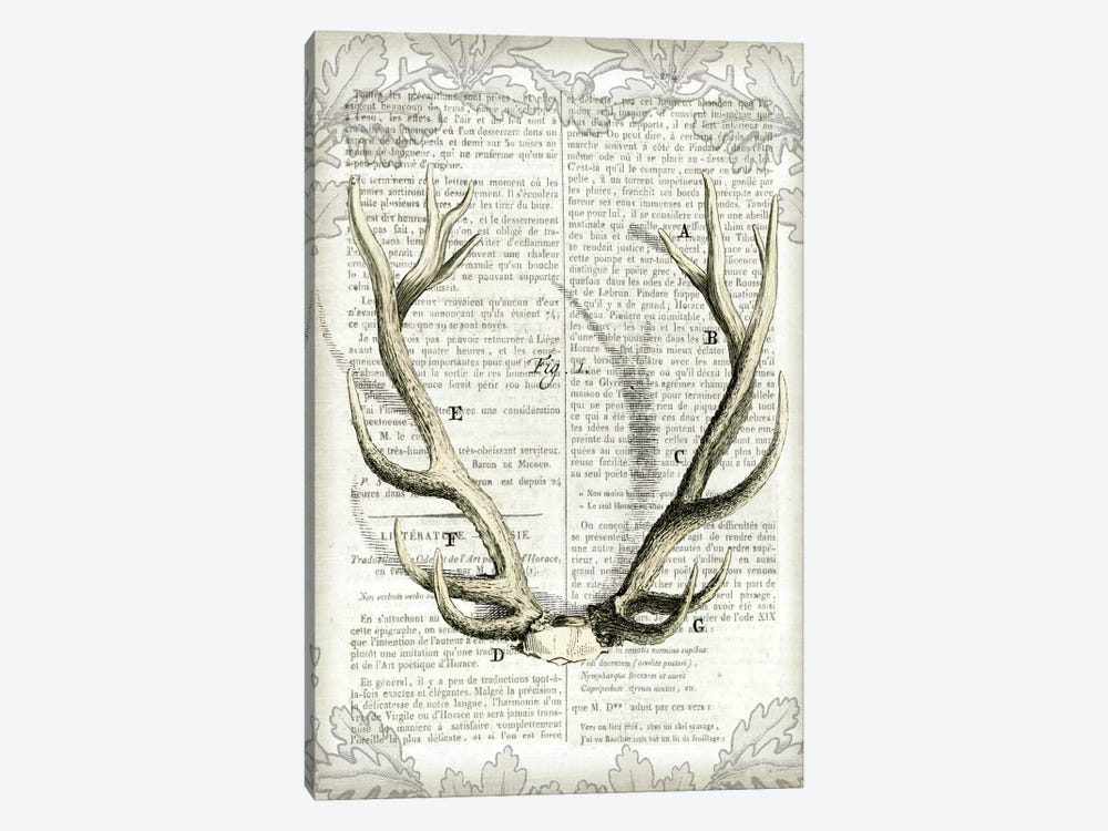 Regal Antlers On Newsprint I by Sue Schlabach 1-piece Canvas Wall Art