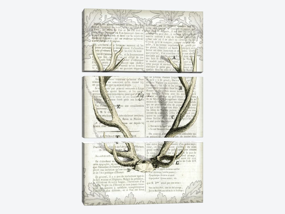 Regal Antlers On Newsprint I by Sue Schlabach 3-piece Canvas Artwork