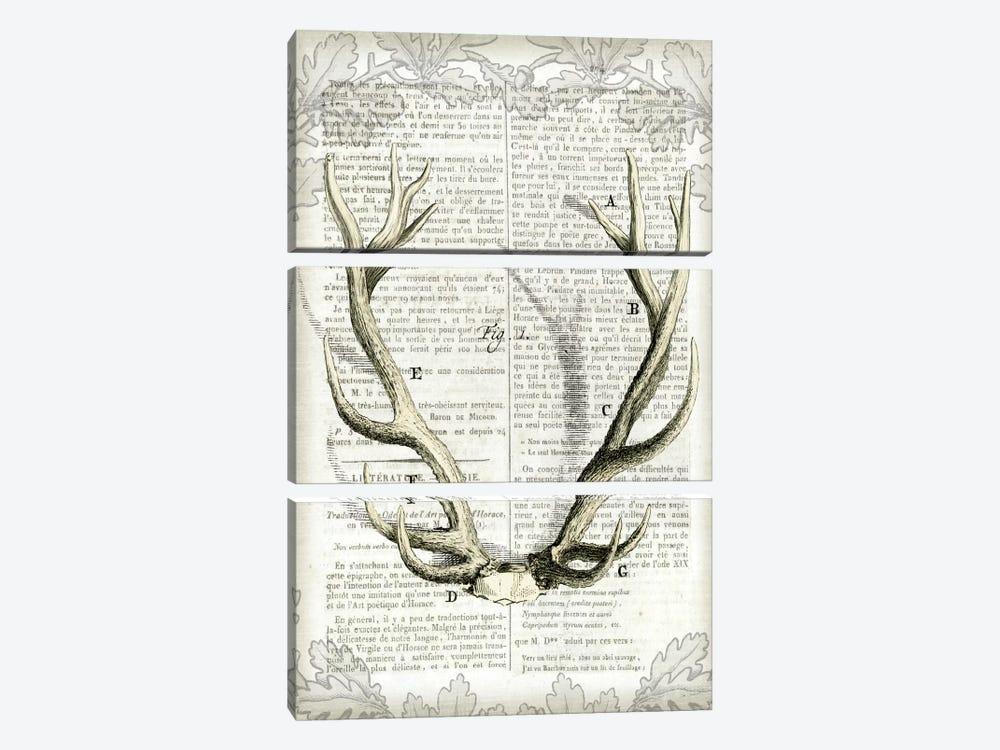 Regal Antlers On Newsprint I by Sue Schlabach 3-piece Canvas Artwork