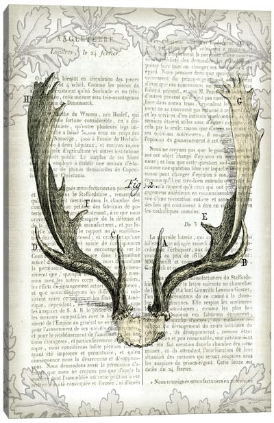 Regal Antlers On Newsprint II Canvas Art Print
