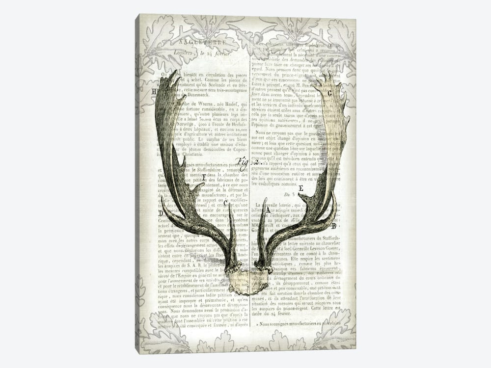 Regal Antlers On Newsprint II by Sue Schlabach 1-piece Canvas Art Print
