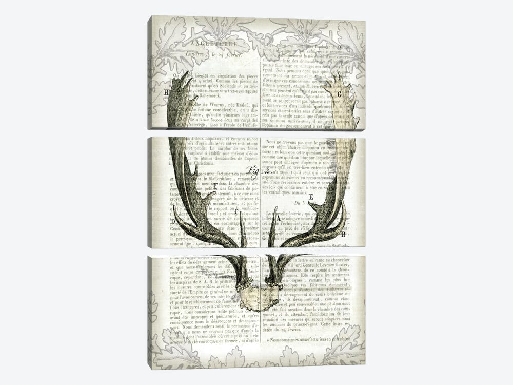Regal Antlers On Newsprint II by Sue Schlabach 3-piece Canvas Print
