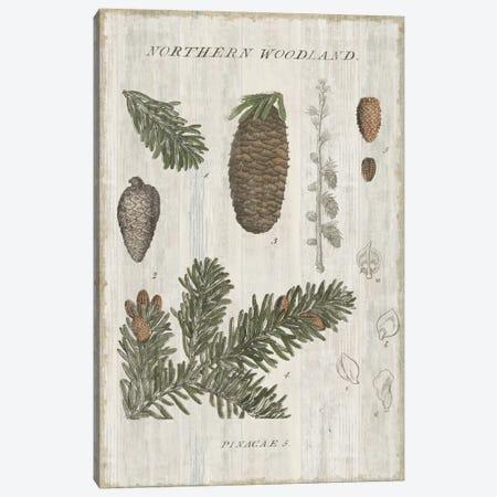 Woodland Chart IV Canvas Print #WAC4565} by Sue Schlabach Canvas Art Print