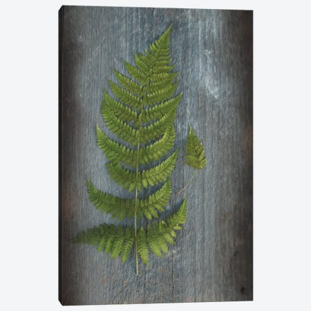 Woodland Fern V Canvas Print #WAC4566} by Sue Schlabach Art Print