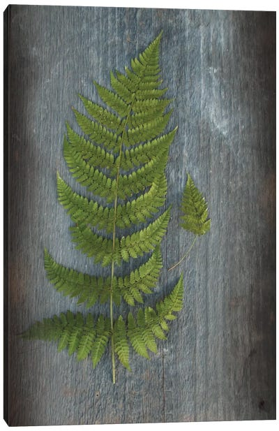 Woodland Fern V Canvas Art Print