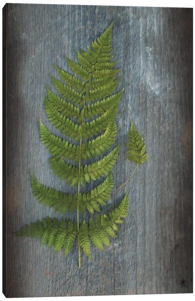 Woodland Fern V Canvas Art Print