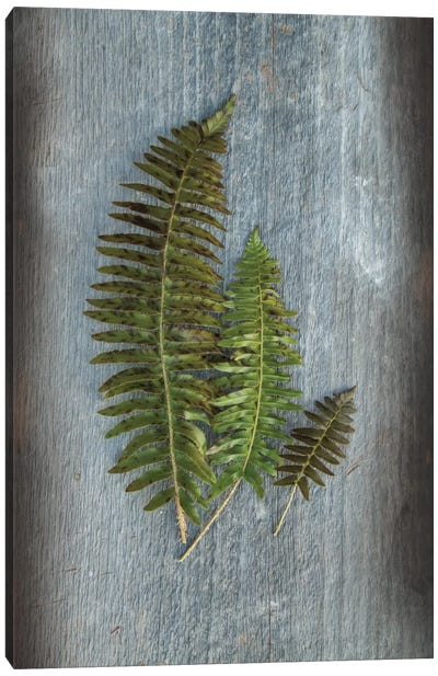 Woodland Fern VI Canvas Art Print