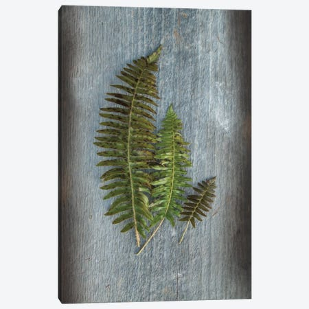 Woodland Fern VI Canvas Print #WAC4567} by Sue Schlabach Canvas Art Print