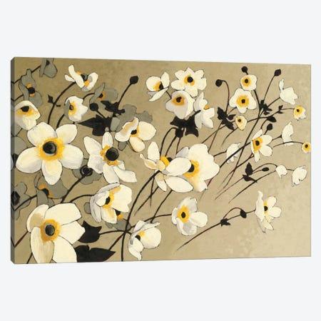 Anemones Japonaises Blancs Canvas Print #WAC4568} by Shirley Novak Canvas Artwork