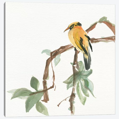 Black Napped Oriole Canvas Print #WAC4625} by Chris Paschke Canvas Wall Art