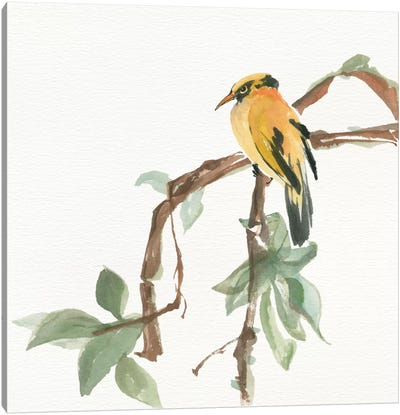 Black Napped Oriole Canvas Art Print
