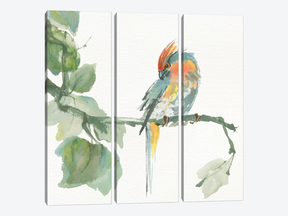 Crested Cockatoo 3-piece Canvas Art