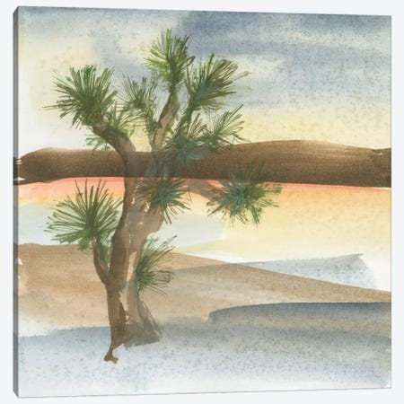 Desert Joshua Tree Canvas Print #WAC4627} by Chris Paschke Canvas Artwork