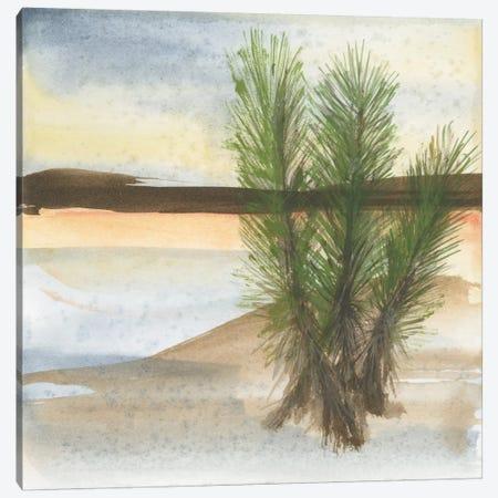 Desert Yucca Canvas Print #WAC4628} by Chris Paschke Canvas Print