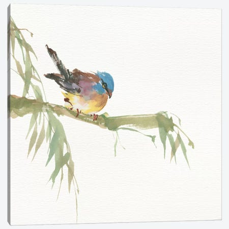 Finch Canvas Print #WAC4630} by Chris Paschke Canvas Artwork