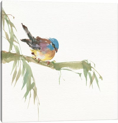 Finch Canvas Art Print