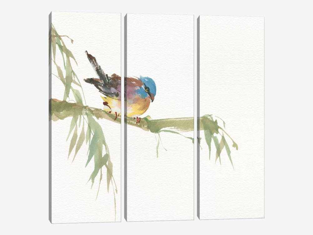 Finch by Chris Paschke 3-piece Art Print