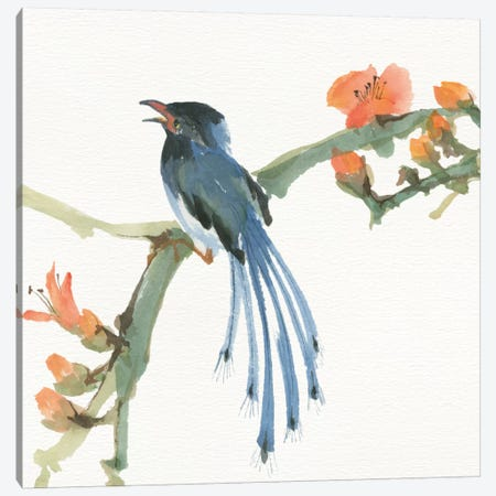 Formosan Blue Magpie Canvas Print #WAC4631} by Chris Paschke Canvas Art