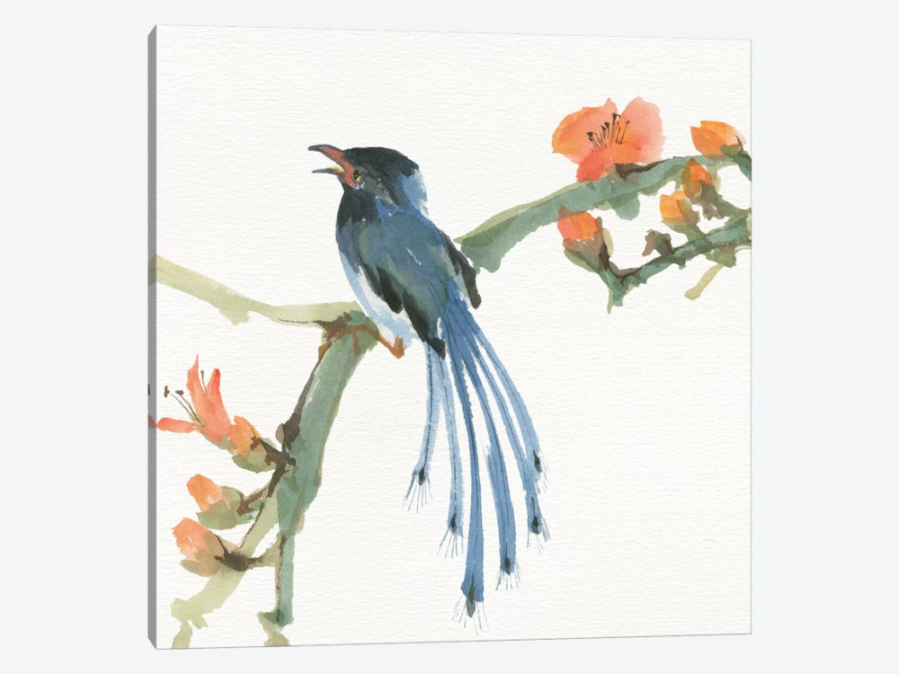 Formosan Blue Magpie by Chris Paschke 1-piece Canvas Wall Art