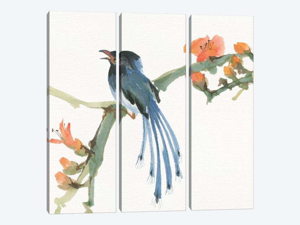 Formosan Blue Magpie by Chris Paschke 3-piece Canvas Wall Art