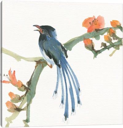 Formosan Blue Magpie Canvas Art Print