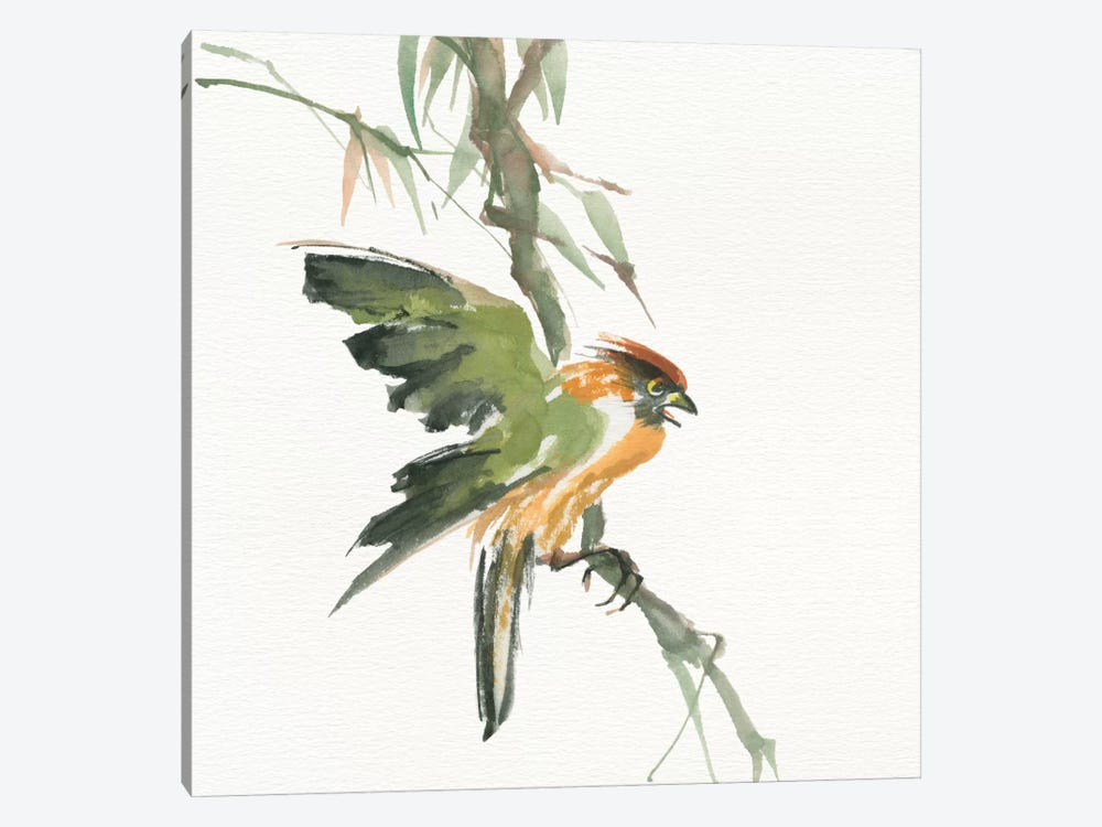 Formosan Firecrest by Chris Paschke 1-piece Canvas Art Print