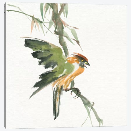 Formosan Firecrest Canvas Print #WAC4632} by Chris Paschke Canvas Art