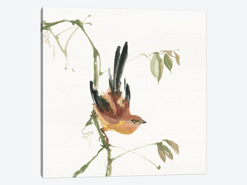 Mountain Bush Warbler by Chris Paschke 1-piece Canvas Artwork