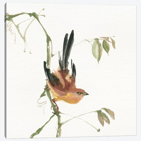 Mountain Bush Warbler Canvas Print #WAC4644} by Chris Paschke Canvas Artwork