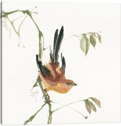 Mountain Bush Warbler Canvas Art Print