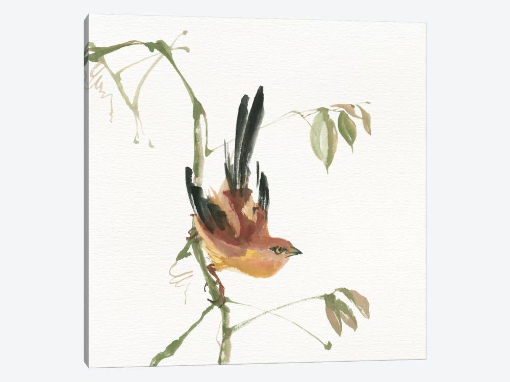 Mountain Bush Warbler by Chris Paschke 1-piece Canvas Artwork