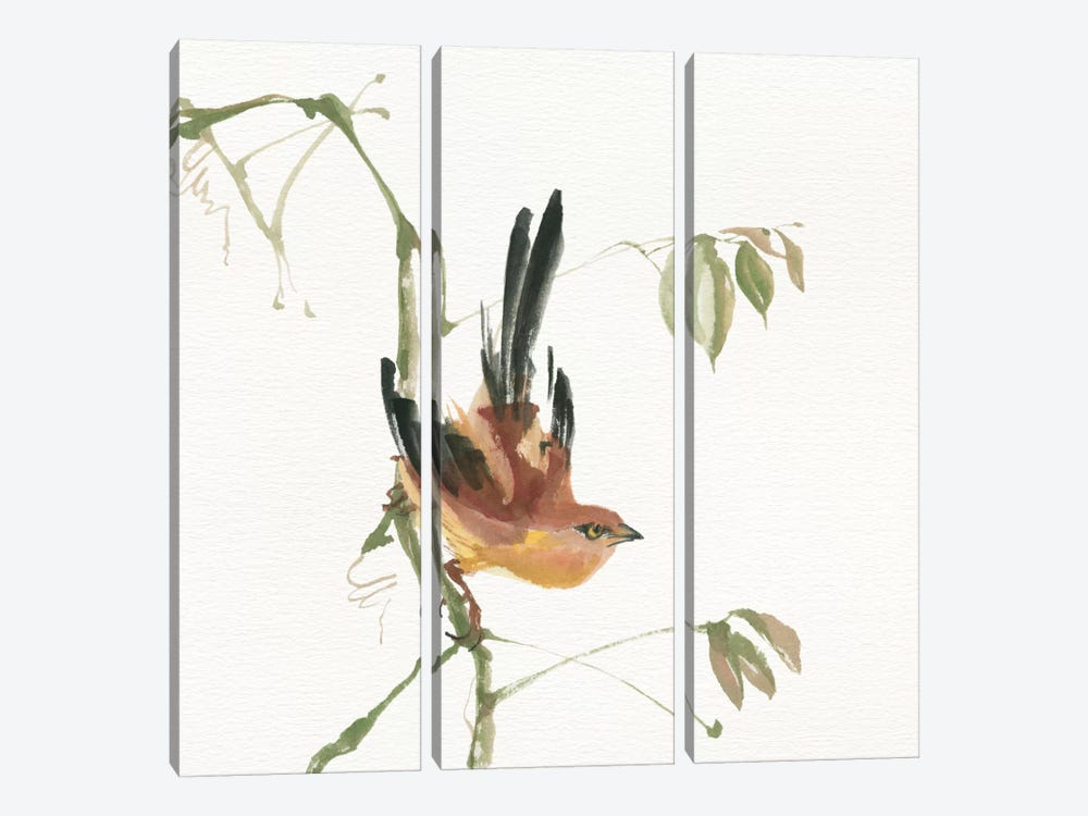 Mountain Bush Warbler by Chris Paschke 3-piece Canvas Art