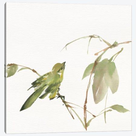 Sisken Canvas Print #WAC4652} by Chris Paschke Canvas Artwork